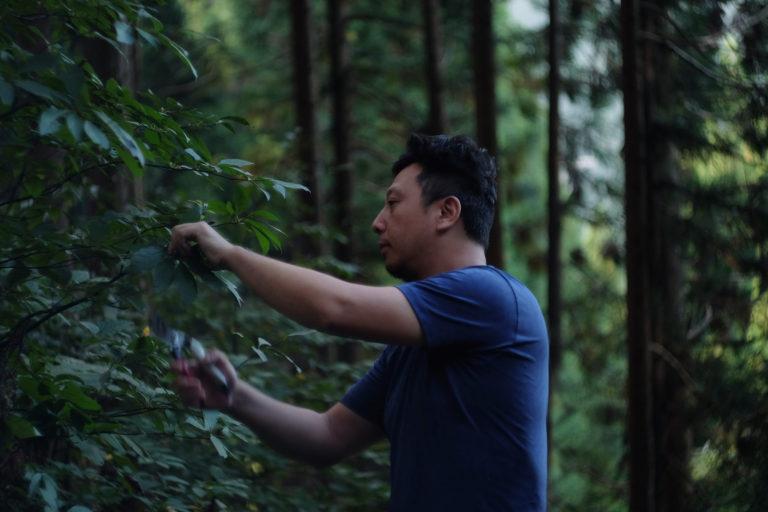豊かな森とそこで採れる樹木やハーブ